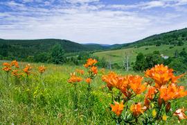 Lato w Górach Bystrzyckich