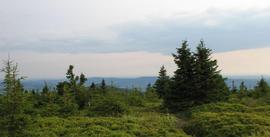Przełęcz Puchacza